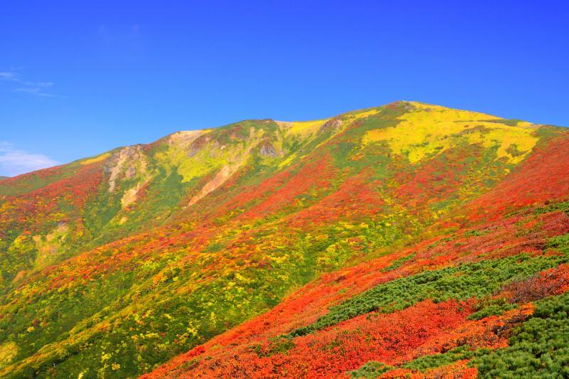 [ 栗駒山全景 ]  草紅葉と満天星ツツジの紅葉に彩られた季節