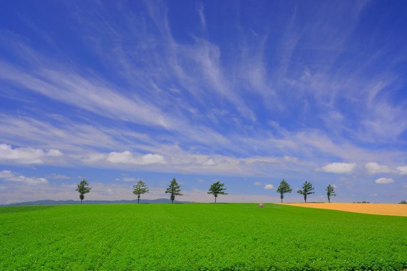 [ 女満別メルヘンの丘 ]  7本の木が印象的な美しい丘です。