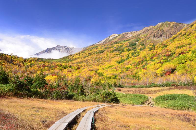 [ ワタスゲ湿原の秋 ]  大雪渓から湧き上がってくる雲海が白馬岳を隠そうとしていました。秋とはいえ山の天気は油断できません。