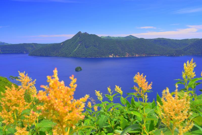 [ アシチルベ咲く摩周湖 ]  アシチルベの花が綺麗に咲き誇っていました。