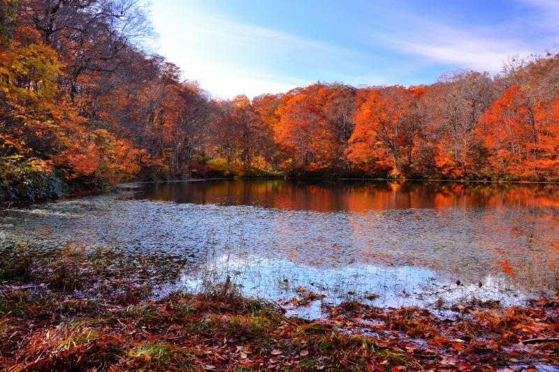 [ 夕刻の湖畔 ]  夕刻の斜光が見頃を過ぎたブナの葉に今一度輝きを与えていました。