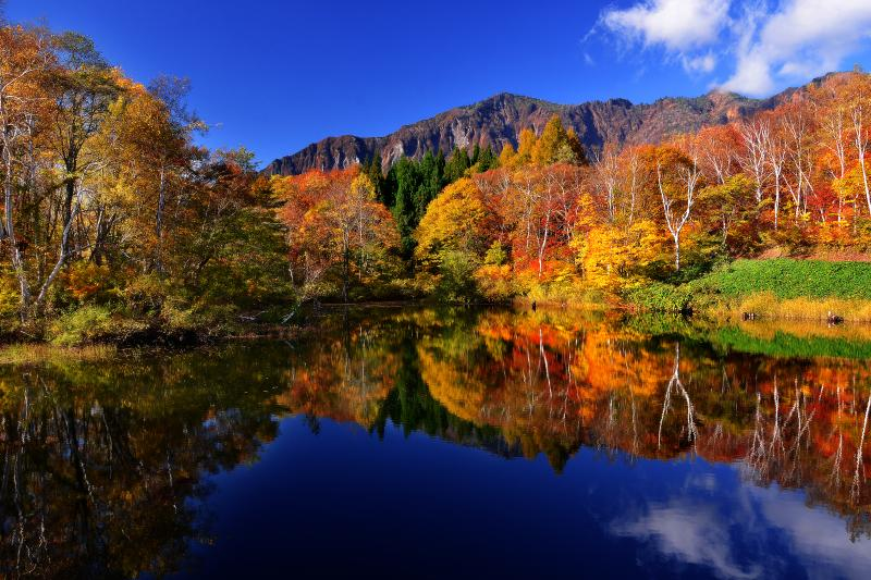 [ 秋山郷 ]  のよさの里近くの天池。遠景の鳥甲山と湖畔沿いのダケカンバの水面への映り込みが印象的でした。年によっては初冠雪した鳥甲山と天池の紅葉を同時に見ることもできます。午前中の時間が撮影にはお勧めです。