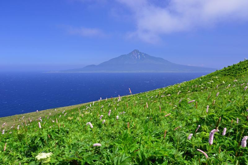 [ 斜面に咲き誇る高山植物と利尻富士 ]  桃岩展望台からの利尻富士。礼文島は花の浮島と言われるだけあって海抜0mから高山植物が咲き誇ります。高山植物が多いのは礼文林道南部で桃岩展望台周辺は特に密集して咲いています。時期によって咲く種類が異なるのでお目当ての花がある場合はその時期に合わせて訪れるとよいでしょう。