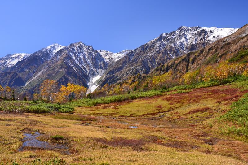 [ 展望湿原 ]  秋の展望湿原から見た初冠雪の白馬三山。自然園入口から約1時間の行程 。ここは栂池湿原の南端に位置し白馬三山と大雪渓の最大のビューポイントです。