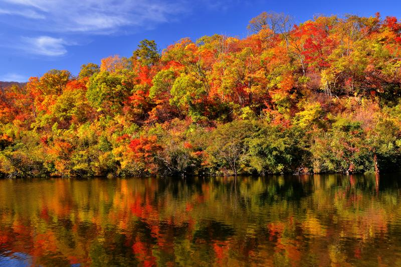 田茂木池 | 赤と緑の共演