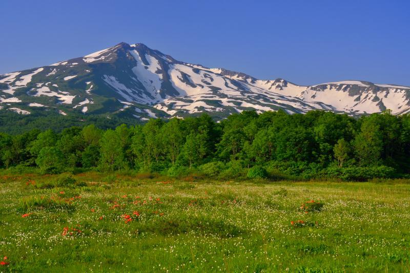 [ ワタスゲと鳥海山 ]  6月初旬にはワタスゲも見頃を迎えます。