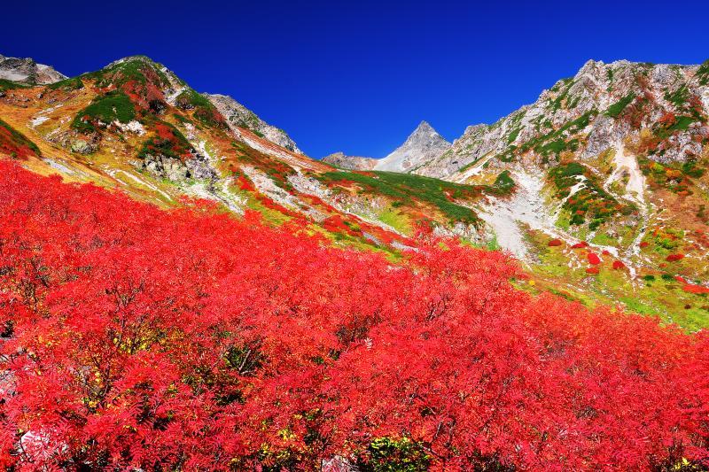 [ 錦秋の槍沢カール ]  秋の天狗原。ナナカマドで埋め尽くされた紅葉の美しさと槍ヶ岳を望むロケーションは涸沢に引けをとらない。