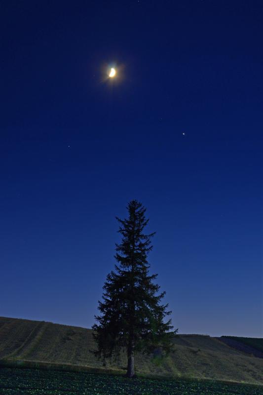 [ 宵の明星 ]  若い月とビーナスがクリスマスの木の上で微笑んでいるようでした。