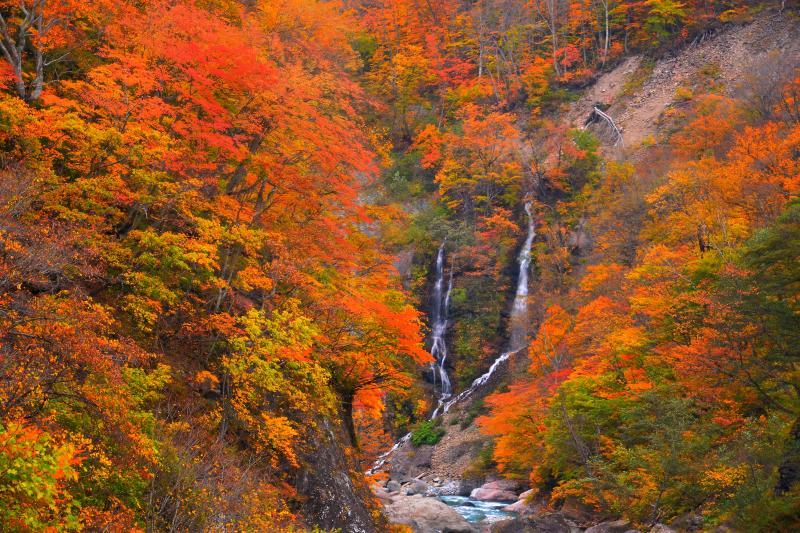 [ 夫婦滝紅葉 ]  二つの流れが交わりながら中津川に注ぎ込む様はまるで仲睦まじい夫婦のよう。
