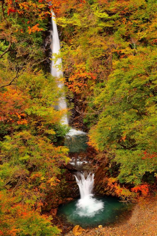 [ 大山滝紅葉 ]  秋の大山滝は静寂な空気に包まれていました。