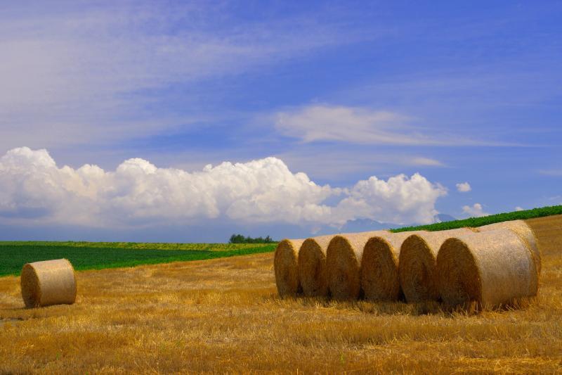 [ 麦稈ロール ]  ロール状に巻かれた収穫後の麦わらが北海道らしさを醸し出しています。