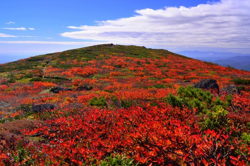 [ 中央コースの紅葉 ]  カエデと満天星ツツジの紅葉に囲まれた登山道