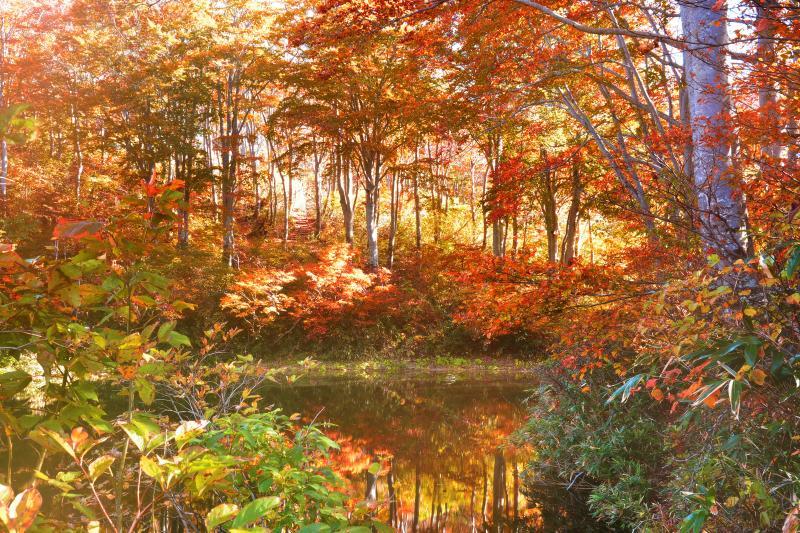 [ 茶屋池湖畔 ]  柔らかな光に包まれた湖畔沿いの秋景色