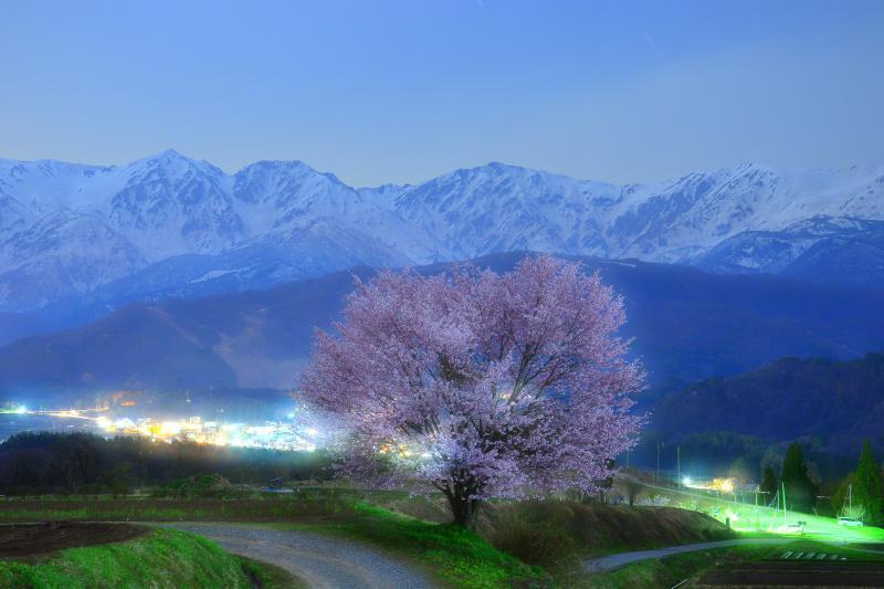 [ 月光を浴びて ]  上品な月明かりに浮かび上がる野平の一本桜と白馬三山