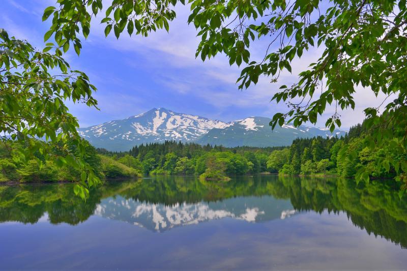 [ 大潟溜池 ]  新緑の美しい季節でした。