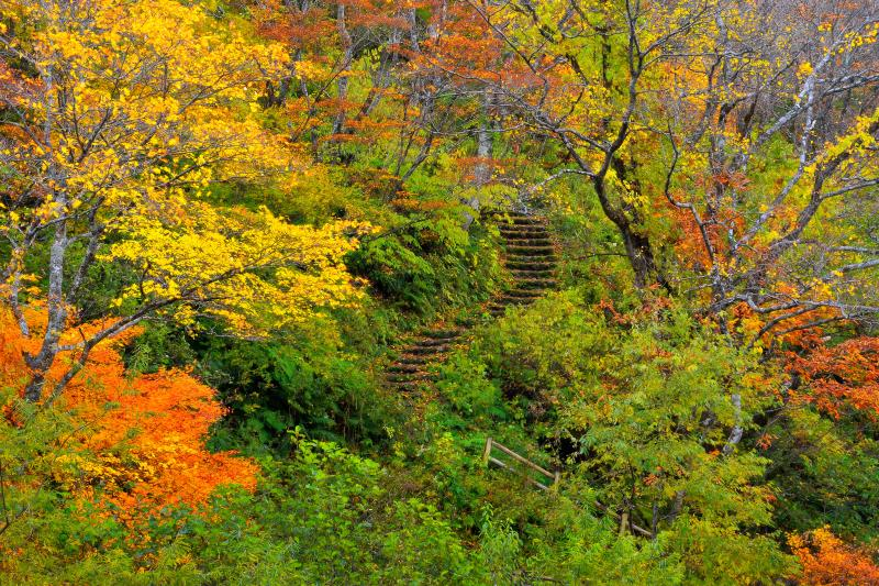 [ 石段コース ]  広葉樹に囲まれた686段の石段