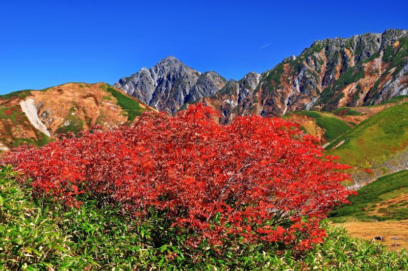 [ 天狗原紅葉 ]  天狗平から見た剣岳。ここから見る剣岳は非常にピラミダルな形をしています。優しい山容の立山とは趣の異なった荒々しい表情が印象的でした。