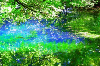 眩しくも爽やかな木漏れ日  木漏れ日が新緑を映す青い水面を輝かせていました。
