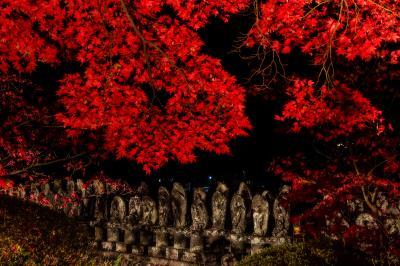 長円寺| 一際赤い一行寺楓のライトアップ