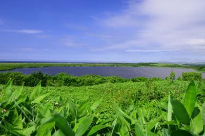 メグマ沼| 稚内空港近くにあるメグマ沼。熊笹に覆われた緑の美しい沼。