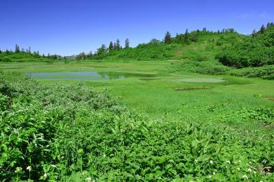 高谷池湿原| 富士見平から約30分で高谷池に着きます。ここには山荘とテント場があり、特に紅葉の時期に訪れてゆっくりするのもよいでしょう。湿原に囲まれた静寂な時を過ごせます。