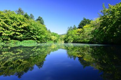 雲場池| 軽井沢散策の起点となる雲場池。萌木色の新緑と青い空、それらを映しこむ静かな湖面。観光地としてにぎわう軽井沢にあって一時喧騒を忘れさせてくれる場所でした。