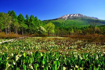 [ 夢見平遊歩道 新緑とミズバショウ ]  妙高の外輪山のひとつ三田原山と夢見平の水芭蕉。例年だと5月末頃が見頃です。遊歩道から三脚を使用して撮影。日当たりのよい開放感のある湿原です。