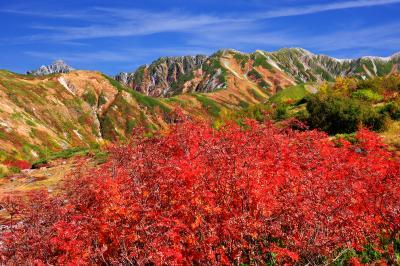 立山連邦とナナカマド| 天狗平から見た立山連峰。道路沿いのナナカマドが真っ赤に色づいていました。