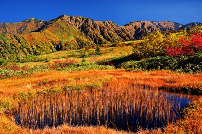 立山の餓鬼田| 弥陀ヶ原の西端から見た餓鬼田と大日連峰。弥陀ヶ原内はナナカマドやダケカンバは少ないが地糖と草紅葉が美しい。