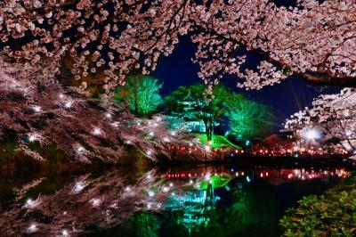 高田公園 日本三大夜桜| ライトアップに照らされ、妖艶な雰囲気に包まれた高田城址の夜桜。日本三大夜桜に数えられています。