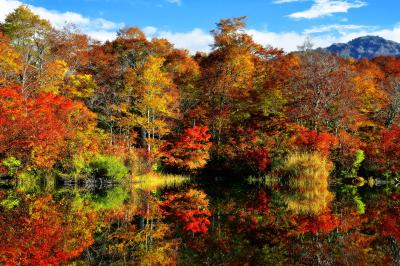 [ 鎌池 紅葉 ]  東側湖畔の紅葉も見事に色づいていました。東側の空が開けているので朝日を見るのに適した場所です。