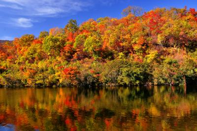田茂木池| 赤と緑の共演