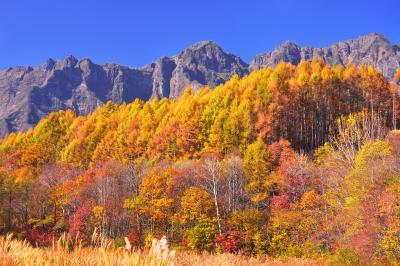 品沢高原| カラマツの黄葉に彩られた戸隠連峰