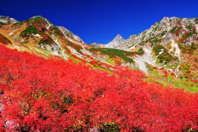 錦秋の槍沢カール| 秋の天狗原。ナナカマドで埋め尽くされた紅葉の美しさと槍ヶ岳を望むロケーションは涸沢に引けをとらない。