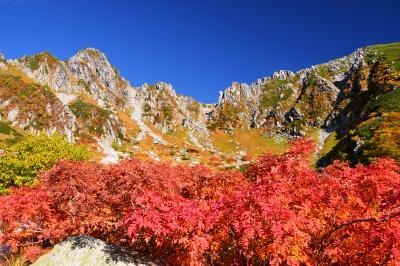 ナナカマドと宝剣岳| 千畳敷はほとんどがダケカンバの黄葉ですが、点在するナナカマドの群生を前景にして撮影もできます。午前中の早い時間がお勧めです。
