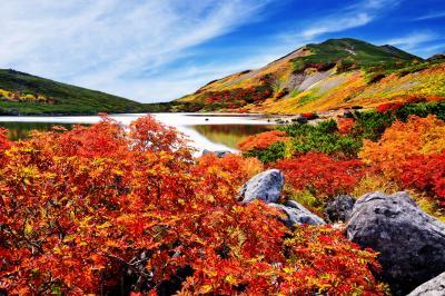 [ 白馬大池 紅葉 ]  秋晴れの白馬大池。短い夏が終わると植物は秋の表情に。ナナカマドの紅葉が綺麗でした。紅葉の見頃が短く、タイミングが掴みづらいので事前の下調べが重要です。