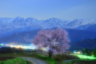 月光を浴びて| 上品な月明かりに浮かび上がる野平の一本桜と白馬三山