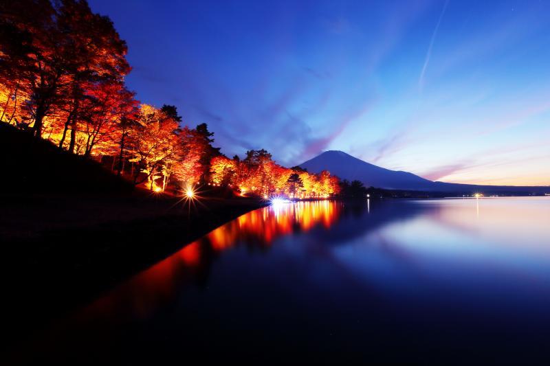 紅葉ライトアップ | 夕暮れ時、ライトアップされた並木の紅葉が美しく光輝いていました。
