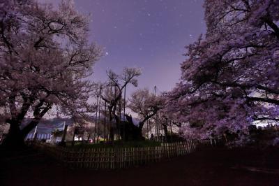 星夜の神代桜| 千年の時を経て咲き誇る神代桜。空にはたくさんの星が輝いていました。