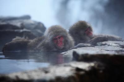 温泉| 野猿公苑では温泉に入る猿の姿が大人気。