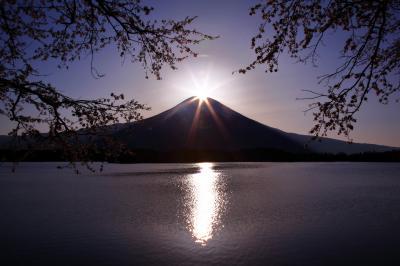 [ 桜ダイヤモンド ]  春は桜フレームのダイヤモンド富士を見ることができます。
