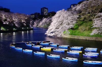 千鳥ヶ淵夜景| 夜には桜がライトアップされ、千鳥ヶ淵名物のボートが並びます。