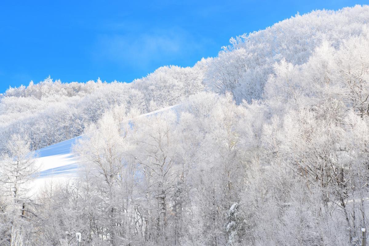 青空に白い森