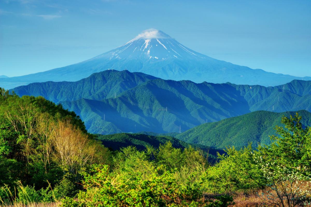 大蔵高丸からの富士山 左右の稜線のバランスが美しい、新緑に映える富士山。