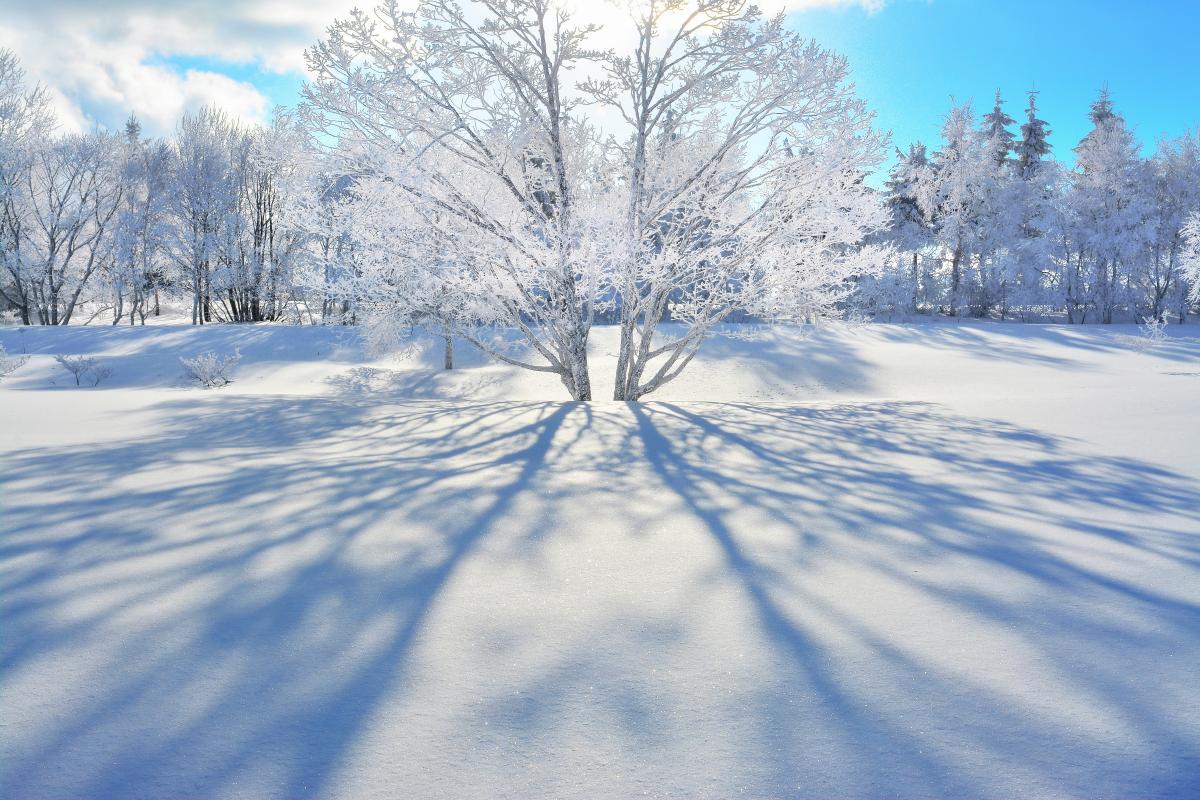 雪景色に伸びる影