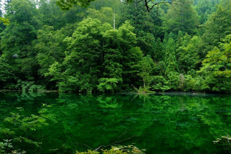 深い森に包まれた神秘的な場所 | 透明度の高い清らかな水が深い森を映し出します。緑に包まれた神秘的な場所。