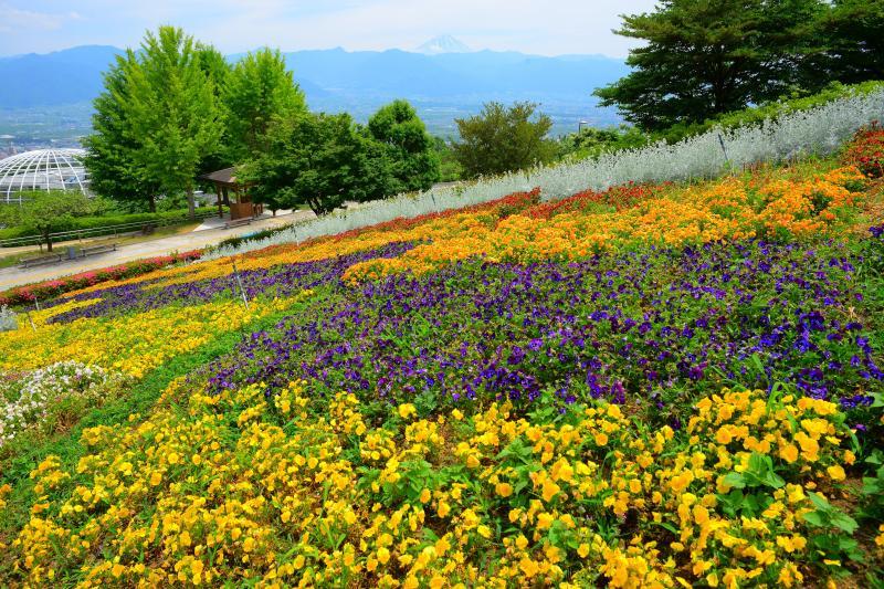 [ 斜面に広がる花畑 ]  園内は果樹・花で溢れています。季節ごとに違った風景を楽しむことができます。