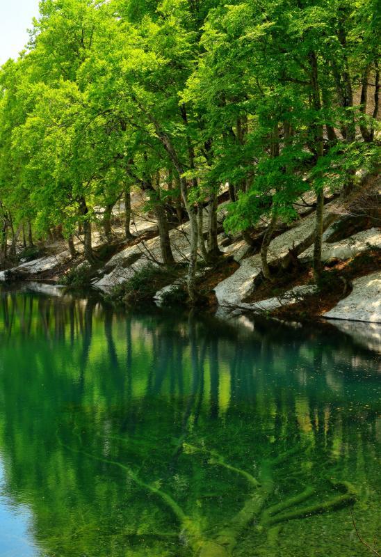[ 新緑のブナを映す水鏡 ]  水面が穏やかな時はシンメトリーになります。鎌池の水は透明度が高く、池の底に沈む朽ちた木を見ることができました。