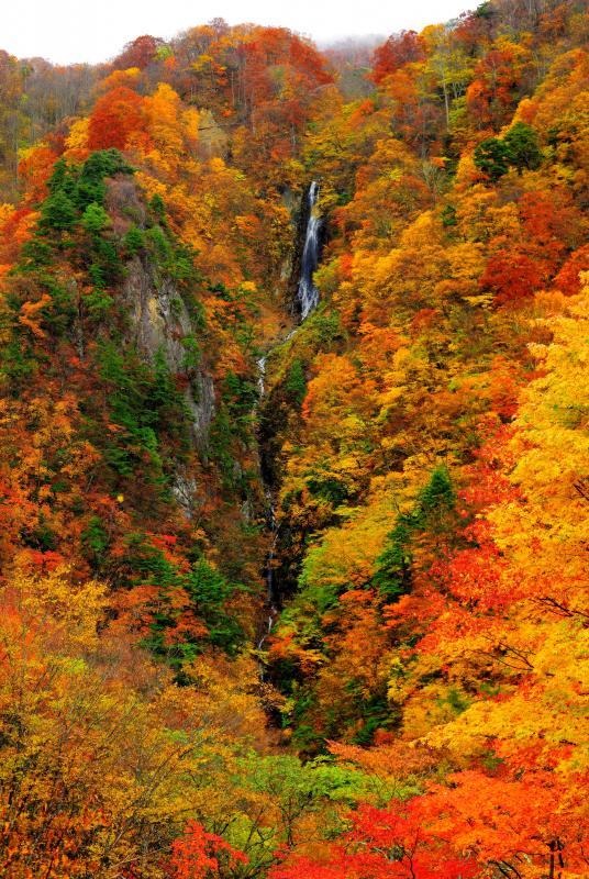 [ 松川渓谷 八滝 ]  谷深いV字谷が錦の彩りに包まれます。霧が発生すると幻想的になります。