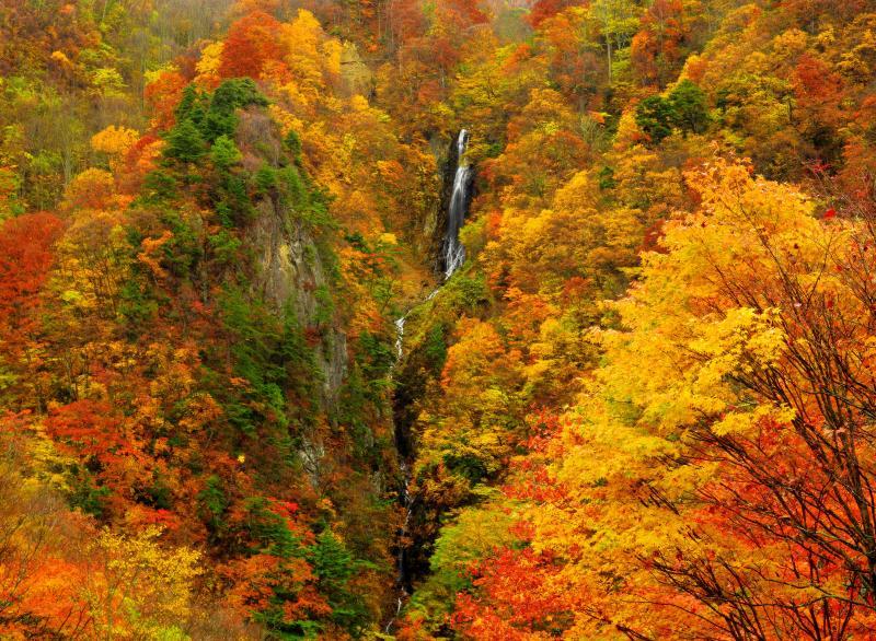[ ひとすじの流れ ]  秋雨が降り出しそうな曇り空で撮影。晴天の場合は逆光になるので日中より朝夕がよいかも。